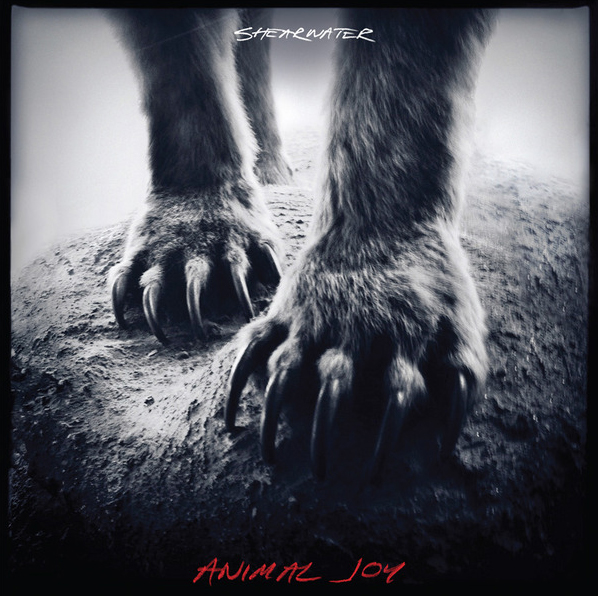 Shearwater's New album Animal Joy out on Sub Pop on 27 February