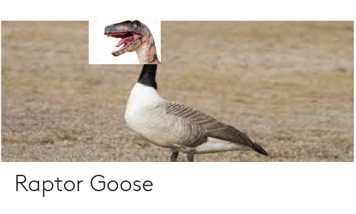 raptor head on a goose