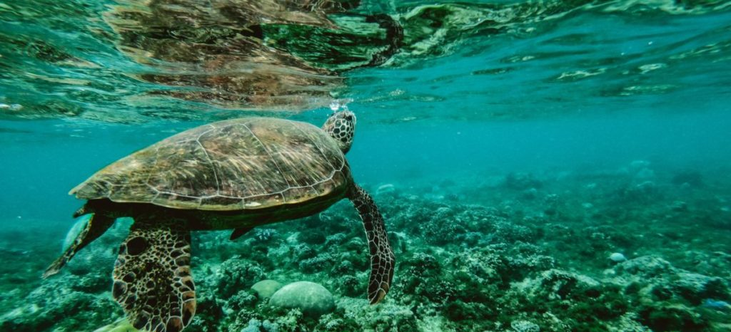 Picture of a sea turtle