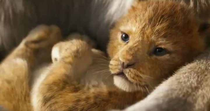 Baby Lion from Lion King Movie